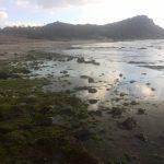 海藻の季節!